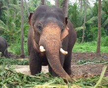 Elefant, Ängste, Coaching