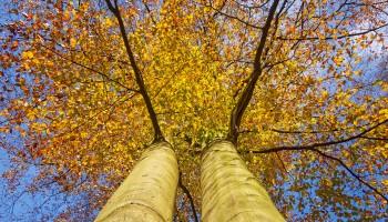 Herbst, Zeit in sich zu gehen, Kontemplation, Zauber, Alptraum