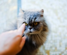 Katze fokussiert auf Zeigefinger