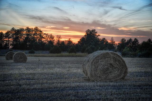 Sonnenuntergang-Diana Robinson - 2