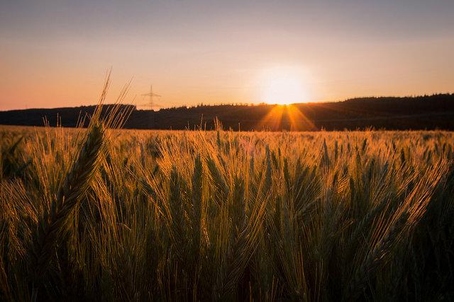 Sonnenuntergang-Thomas Wensing-Grimlinghausen-Deutschland-CC BY-SA 2.0