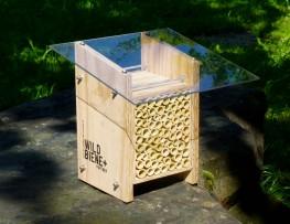 Startup mit dem Ziel die Bienenpopulation zu erhöhen, Träume verwirklichen